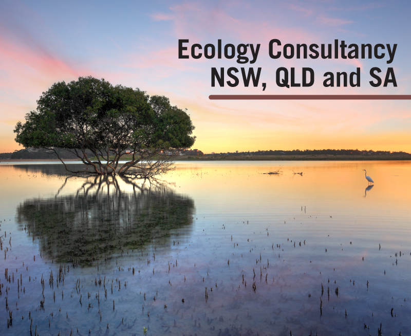 Ecology Consultancy NSW QLD SA